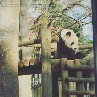 Tokyo, parc zoologique.